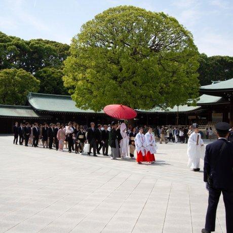 พิธีแต่งงานชินโตแบบดั้งเดิมญี่ปุ่น
