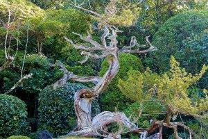 Este grupo de pedras e a árvore simbolizam uma tartaruga
