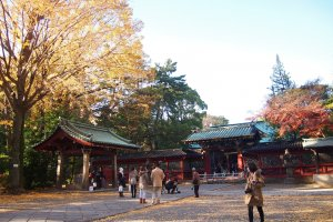 Autumn leaves make the shrine look doubly beautiful.