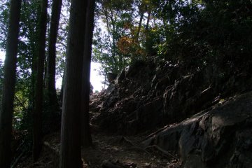 <p>The cool, forested trails of Mt.Hiwada</p>
