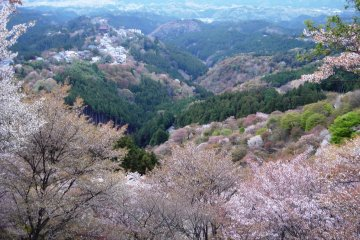 A Visit to Mt Yoshino