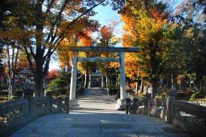 Torii and sando or main street to the shrine.