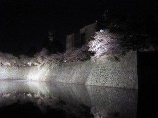 ライトアップされた福井城址の夜桜、お堀の水面に桜が映し出されている