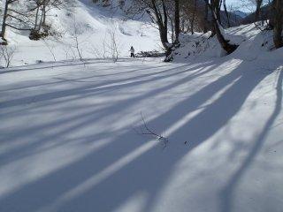 เงาของแมกไม้บนหิมะที่ยังไม่มีใครเยียบย่ำ