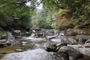 The water flowing in the shallow river is one of the few sounds