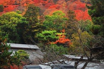 <p>아라시야마의 전통 운송 수단인 인력거</p>