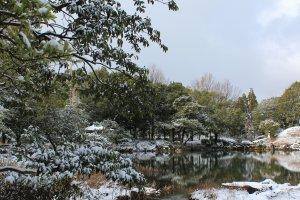 うっすらと積もった雪が葉に乗っている様は趣がある