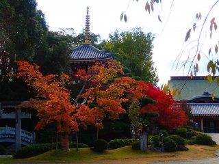 Sắc thu trong khuôn viên đền