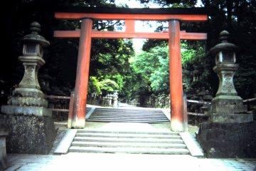 <p>Kasuga Taisha shrine&lsquo;s torii</p>