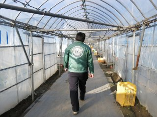 A staff member escorts us to the strawberry greenhouse for our all-you-can-eat strawberry tour