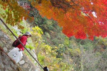 한 나이든 일본인이 파트너들과 함께 가을색깔을 스냅하고 있다. 일반적으로 간사이 지방에서는 현지인들이 매우 친절하다. 당신은 보통 좋은 대화를 나눌 수 있고, 동행할 수 있다