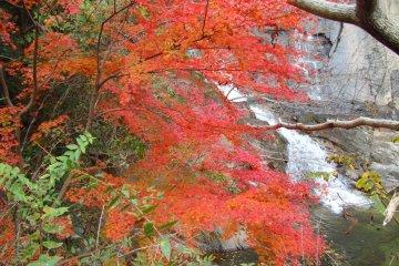 가을의 아름다운 풍경. 하지만, 이 산책로는 봄도 아름답다