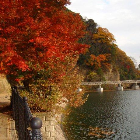神戸、布引の秋の色彩