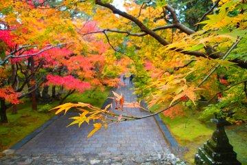 <p>Autumn colors</p>