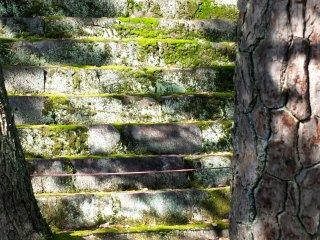 苔むした階段