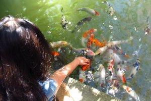 Feeding friendly fish from my fingers