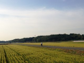 Cycle into the open fields and blue skies of Kumamoto