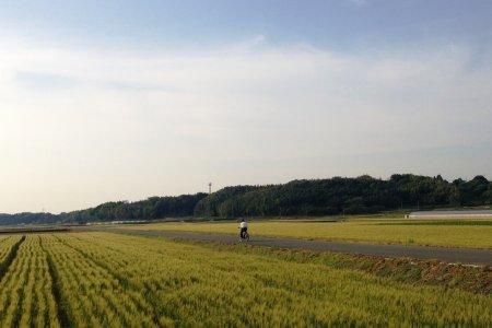 Đạp xe ở Mifune