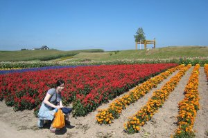 Despite Hokkaido's fame for dairy and meat, it is a paradise for vegetable produce as well