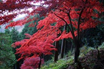 가을의 오야마