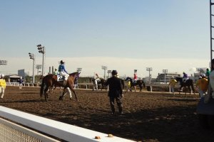 I like standing at the rail near the starting gate. Different from the finish line where huge numbers of people gather, here I can relax, and lean against the fence watching the horses and jockeys get ready to race.