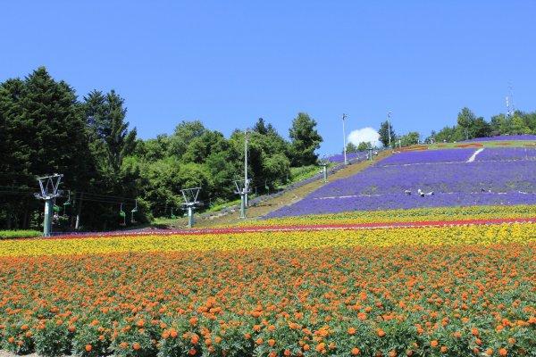 มุมมองจากเบื้องล่างของ Choei Lavender Park