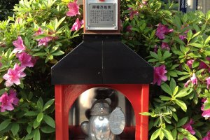招福たぬき (Shofuku Tanuki) สัญญาลักษณ์แห่งความร่ำรวยเงินทอง