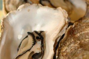 Kanawa Open Shell Oyster