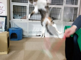 This cat enjoyed displaying his ninja skills for the guests.