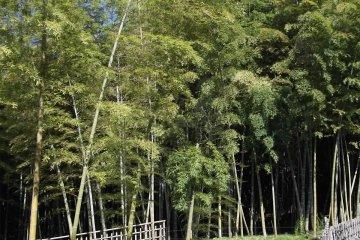 <p>The bamboo grove</p>