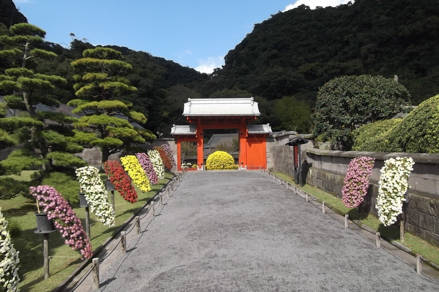 Chrysanthemum displays lining the path to the little gate