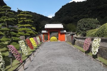 <p>Chrysanthemum displays lining the path to the little gate</p>