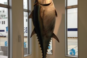 Life size model of Oma's tuna. Bigger than me, a 6ft , 200 lb. man!