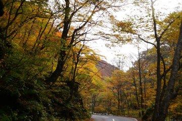 <p>Autumn way</p>