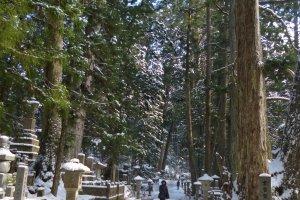 ทางเดินในสุสาน ต้นไม่สูงใหญ่ทำให้รู้สึกว่าคนเราตัวเล็กแค่ไหน