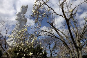 The Kannonbehind some magnolia blossoms.