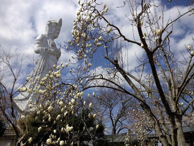 <p>The Kannon&nbsp;behind some magnolia blossoms.</p>