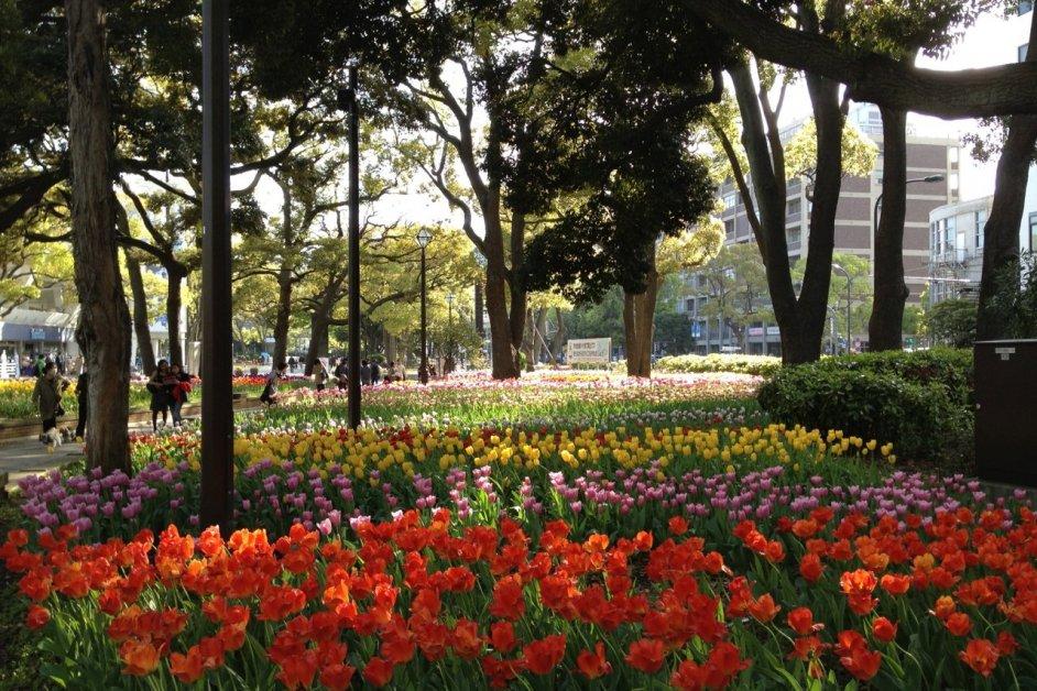 Flowers of Yokohama Park