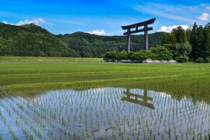 Giant torii
