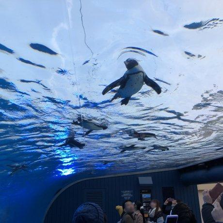 Aquarium Sunshine