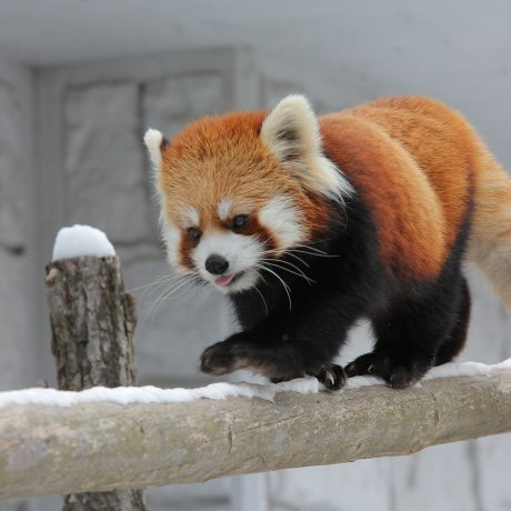 Zoológico Sapporo Maruyama