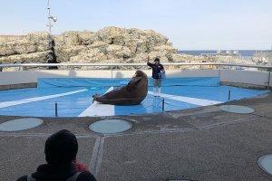 Walrus show