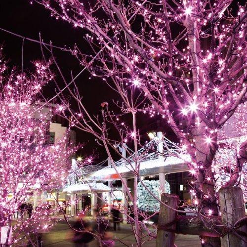 Nishikoyama Illuminations
