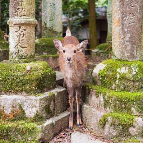 Tản bộ qua công viên Nara