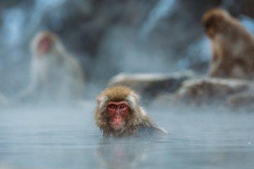 Parque de monos Jigokudani