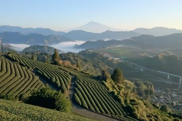 Green Tea, Farm Inn Stay, Tea Ceremony Shizuoka Tour