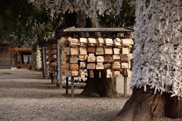 Izumo Taisha Shrine and Matsue Private Tour